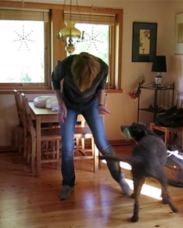 エヴァの引っ張りっこ遊びは、犬がそばに来るトレーニング
