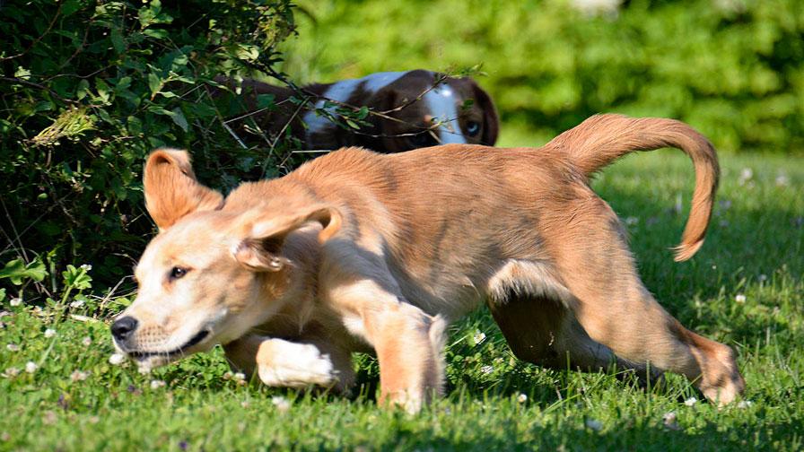 犬と人が自然に共生できる社会を実現するために質の高いドッグトレーナーを社会に送り出す