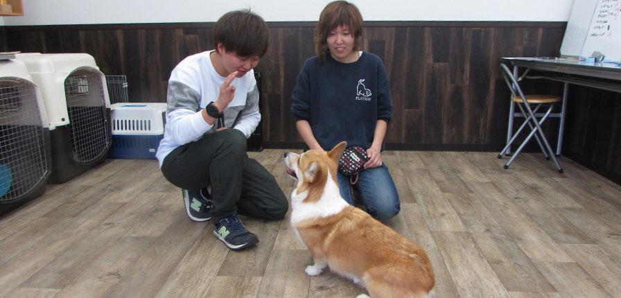 .正しい犬のしつけを提供できるドッグトレーナーを育てる(飼い主様への教育)