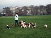 ヨーロッパの犬と人間社会