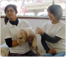 犬の保育園開業