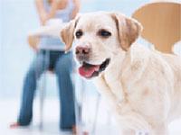 犬の健康セミナー