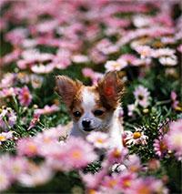犬のためのメディカルアロマ