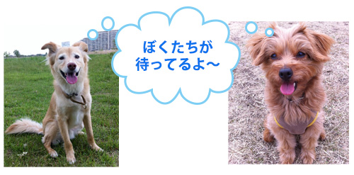 ドッグトレーナースクール・スタッフ犬