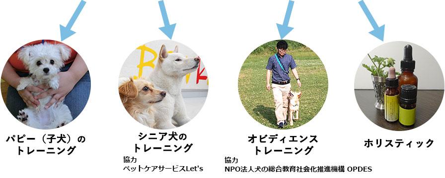 様々なドッグトレーニングによるアプローチ