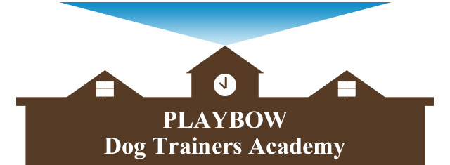 playbow-dogtrainers-academy