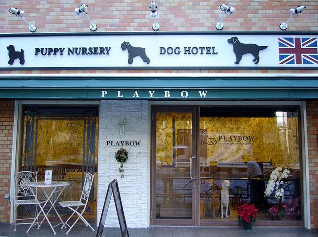 ドッグトレーニング実習店舗 犬の保育園