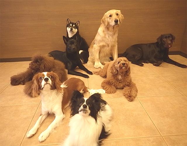犬と関わる仕事の心構えセミナー「ご飯のあげ方や犬同士の相性の見極め方は?」