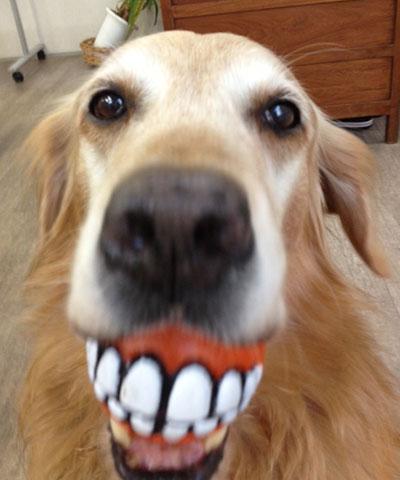 ドッグトレーナースクール スタッフ犬
