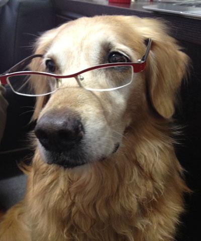 ドッグトレーナースクール 犬のしつけの宿題