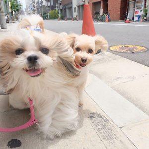犬の社会化②