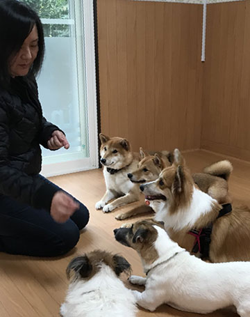 犬の保育園・ドッグホテルを経営