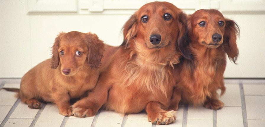 12月限定愛犬しつけ相談付きプレイボゥドッグトレーナーズアカデミースクール説明会