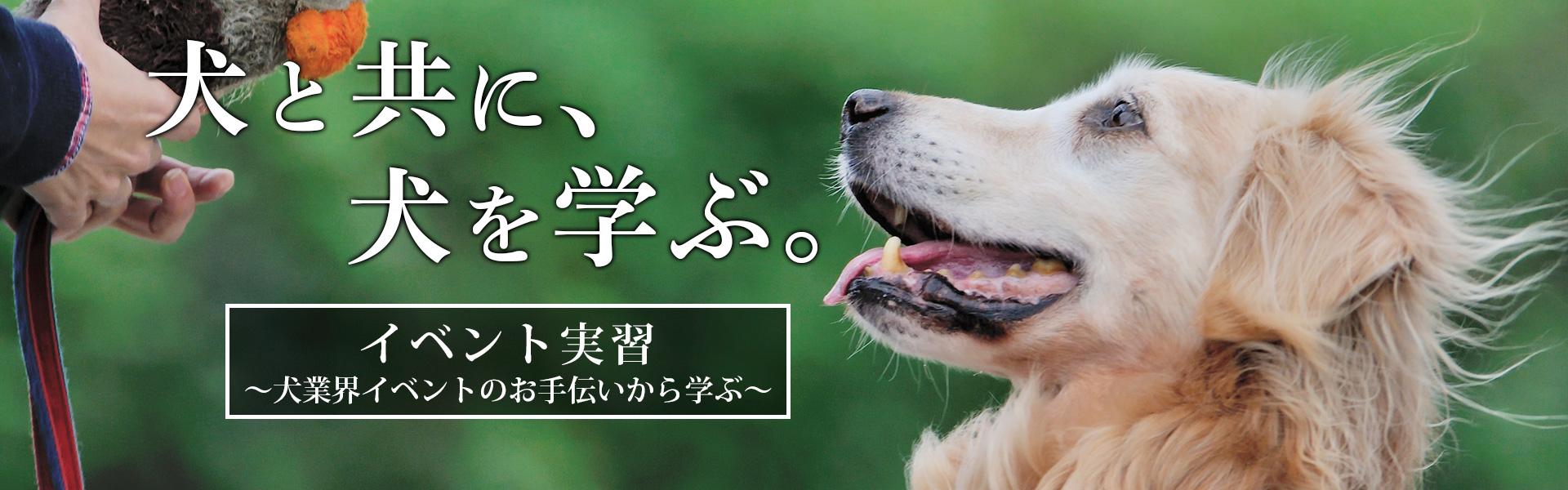 犬業界イベントのお手伝いから学ぶPLAYBOWのイベント実習