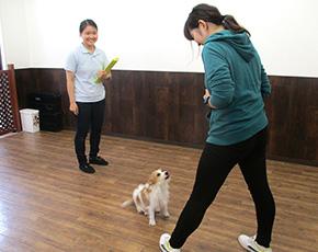 ドッグトレーナー養成スクール体験入学