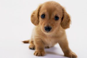 だって犬はこんなに可愛い❤
