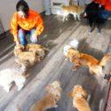 犬の保育園実習の様子