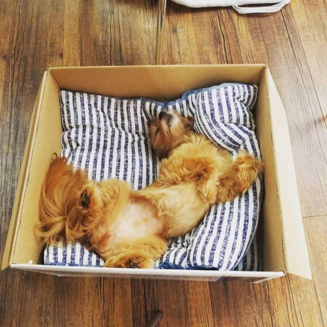 あーちゃん箱で寝ている画像
