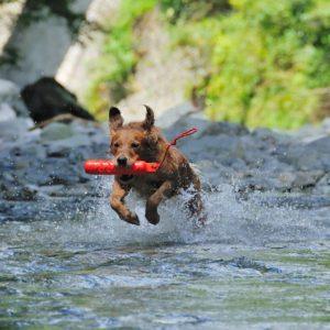 夏だ!水遊びだ!