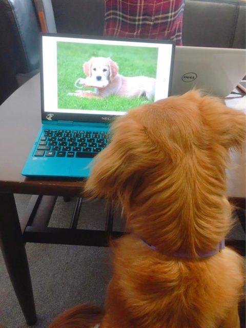 ケイティがPC画面を見つめる写真