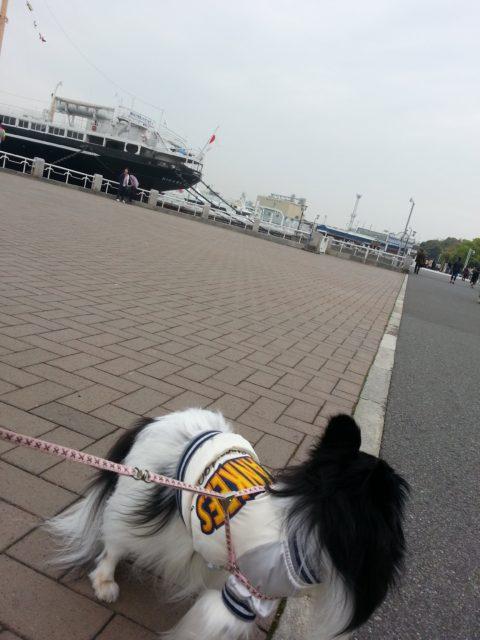 横浜の散歩の写真