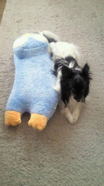 石田の犬の写真