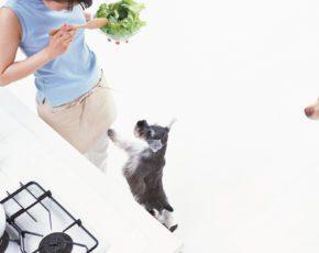 ドッグトレーナーの観点で 学ぶ・伝える「犬の食事と 犬の不安への アドバイス」