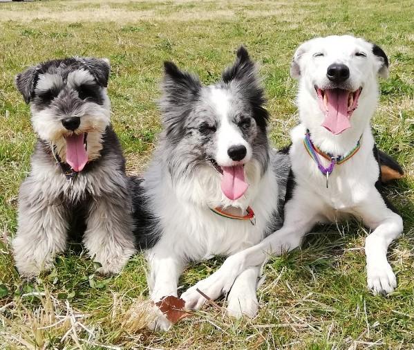 坂井家の犬達