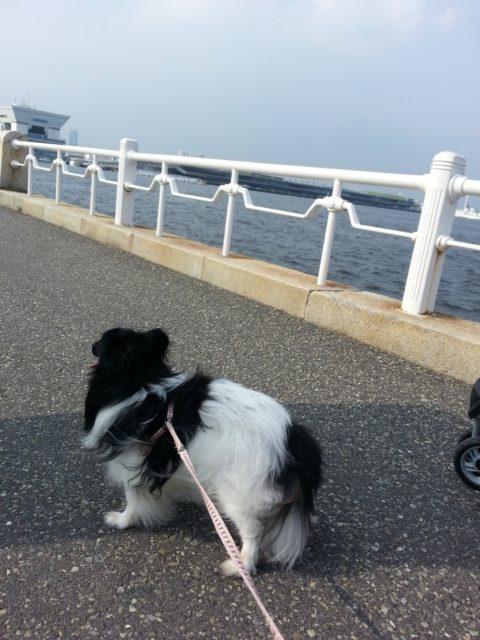 石田家の犬の後ろ姿
