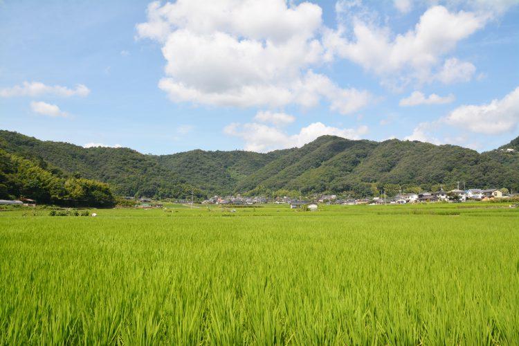 自然豊かな田園風景
