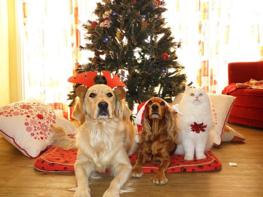 皆さまも素敵なクリスマス、年越しを♪