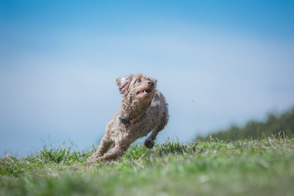 ジャンプしようとする犬
