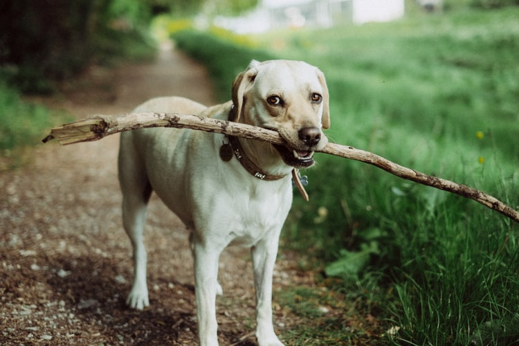 枝を加える犬