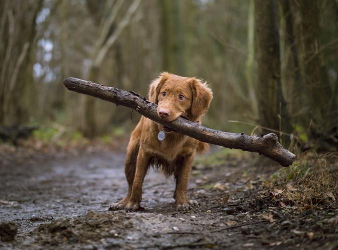木をくわえる犬