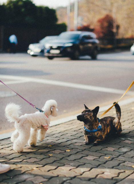 お散歩ですれ違う様子