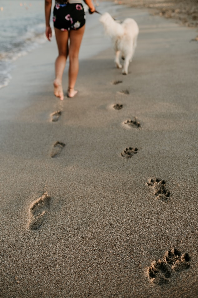 砂浜を歩く犬と人
