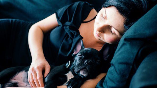 犬と人が寝ている写真