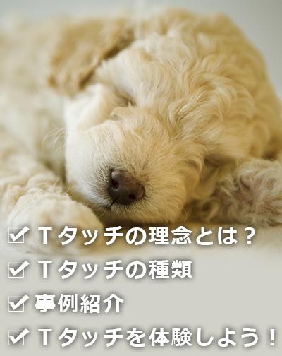 Tタッチの理念・Tタッチ体験