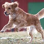 飼い主は犬にとってのマグネットになる!
