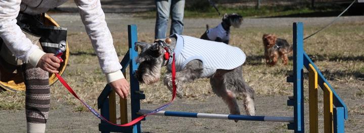 保護犬トレーニング