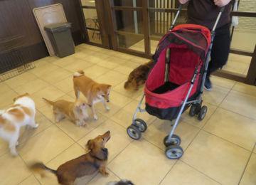 犬の社会化③