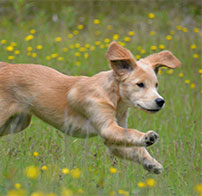 犬のためのホリステックケア
