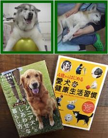シニア犬との幸せな暮らし方