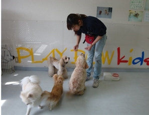 犬の保育園見学会