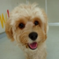 ドッグトレーナースクールの体験セミナー|犬の保育園見学会