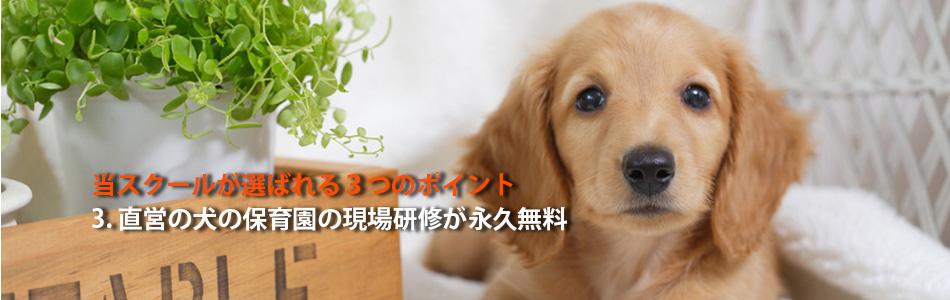 直営の犬の保育園での実習