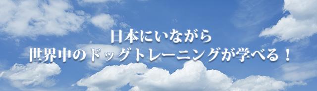 日本にいながら 世界中のドッグトレーニングが学べる!