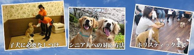 子犬に必要なしつけ、シニアへの対応方法、ホリスティックなど