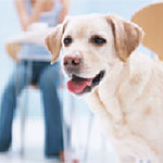 犬の健康とペット保険セミナー