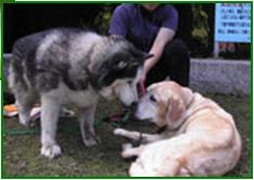 シニア犬セミナー